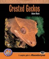 Crested Geckos | Adam Black |