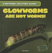 Glowworms Are Not Worms!