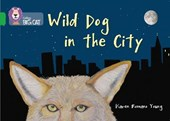 Wild Dog In The City | Karen Romano |