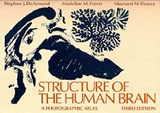 Structure of the Human Brain | Stephen J. (associate Professor Of Pathology, Associate Professor of Pathology, University of California, San Francisco) DeArmond ; Madeline M. (professor of Anatomical Sciences, Professor of Anatomical Sciences, Suny-Stony Brook) Fusco ; Maynard M. (chai |