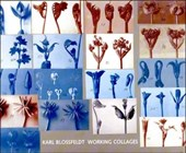 Karl Blossfeldt - Working Collages