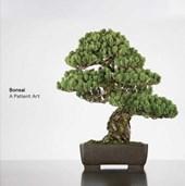 Bonsai : a patient art