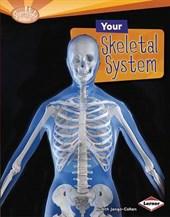 Your Skeletal System