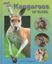 Kangaroos Up Close
