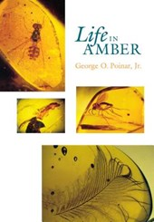 Life in Amber