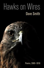 Hawks on Wires | Dave Smith |
