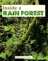 Inside a Rain Forest