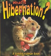 What Is Hibernation?