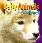 Baby Animals of the Southwest