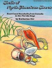Shells of North American Shores | Katherine Orr |