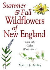 Summer & Fall Wildflowers of New England | Pamela Love |