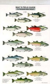 Mac's Field Guide to Trout and Salmon of North America