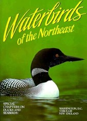 Waterbirds of the Northeast