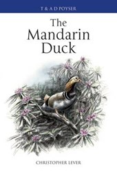 The Mandarin Duck