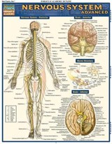 Nervous System Advanced | Vincent Perez |