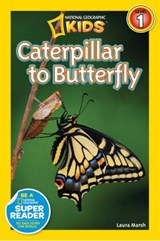 Caterpillar to Butterfly | Laura Marsh |