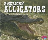 American Alligators | Steve Potts |