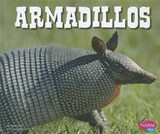 Armadillos | Steve Potts |