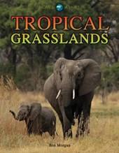 Tropical Grasslands