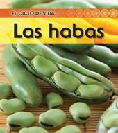 La habas / Broad Bean