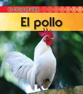 El pollo / Life Cycle of A Chicken