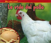 La vida del pollo / A Chicken's Life