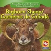 Bighorn Sheep/ Carnero De Canada