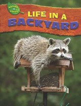 Life in a Backyard | Jen Green |