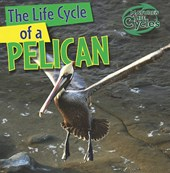 The Life Cycle of a Pelican