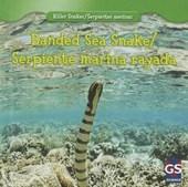 Banded Sea Snake / Serpiente marina rayada