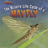 The Bizarre Life Cycle of a Mayfly | Greg Roza |