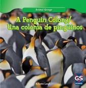 A Penguin Colony / Una Colonia de Pinguinos