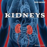 Kidneys | Shannon Caster |