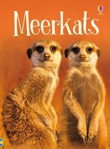 Meerkats | James Maclaine |