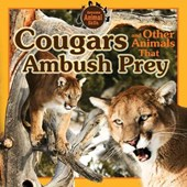 Cougars and Other Animals That Ambush Prey | Vic Kovacs |