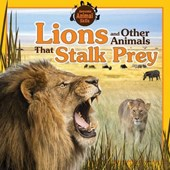 Lions and Other Animals That Stalk Prey | Jennifer Way |
