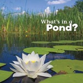 What's in a Pond?