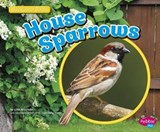 House Sparrows | Lisa J. Amstutz |