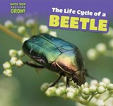 The Life Cycle of a Beetle | Elaine Mckinnon |