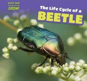 The Life Cycle of a Beetle