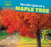 The Life Cycle of a Maple Tree