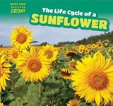 The Life Cycle of a Sunflower | Bonnie Phelps |
