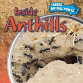 Inside Anthills