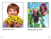 All About Grapes