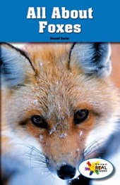 All about Foxes
