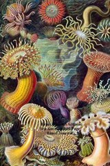 Ernst Haeckel Actiniae Sea Anemone100 Page Lined Journal | Unique Journal |