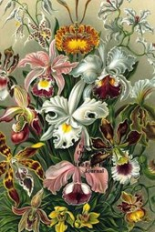 Ernst Haeckel Orchidae Orchid Flowers 100 Page Lined Journal