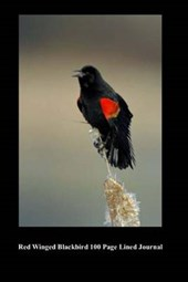 Red Winged Blackbird 100 Page Lined Journal