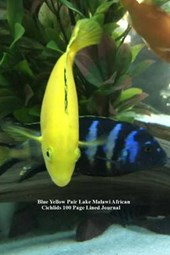 Blue Yellow Pair Lake Malawi African Cichlids 100 Page Lined Journal