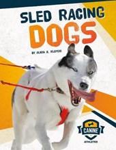 Sled Racing Dogs